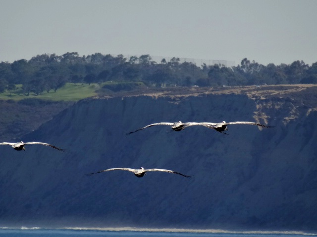 Heading toward Torrey Pines Cliffs