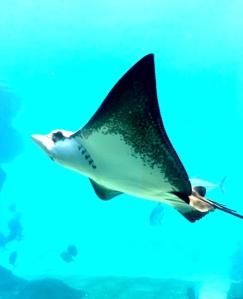 A visit to uShaka Aquarium